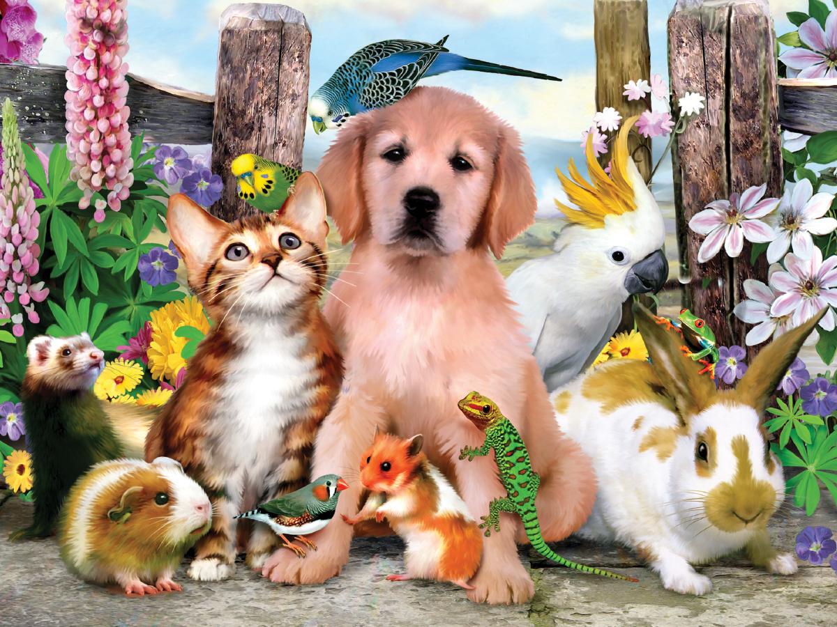 картинки домашних животных красивые вариант размещения